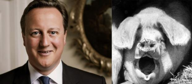 UK Prime Minister David Cameron with pig
