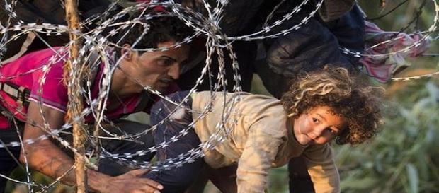 Gardul de sârmă ghimpată rezolvă criza