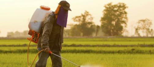 El peligro de los pesticidas en la sociedad