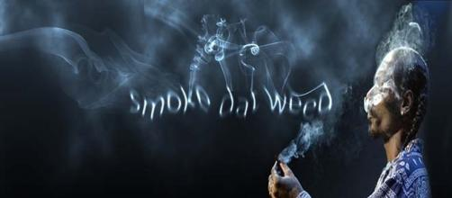 New website to be everything marijuana.