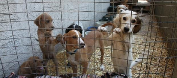 Wetnose Day helps vulnerable animals