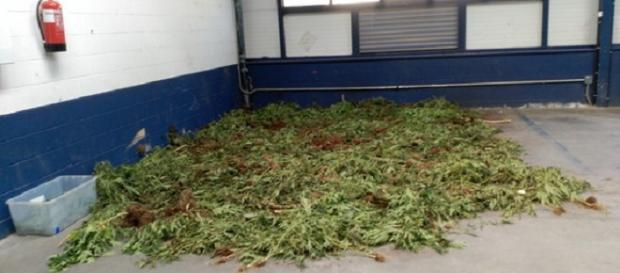La marihuana esparcida por el párking.