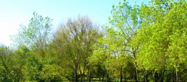 Árboles que hay en la Tierra (más de 3billones)