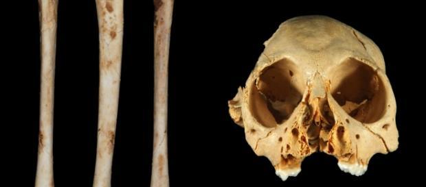 Huesos de mono de hace 1 millón de años