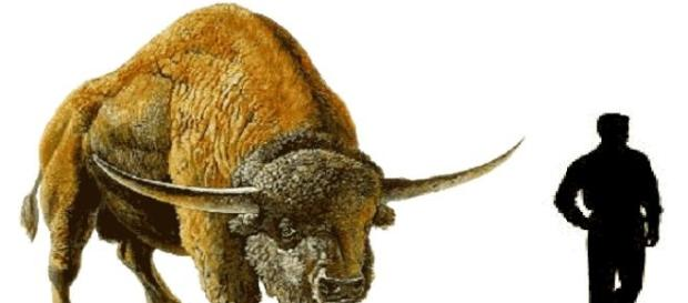 The prehistoric bison stood 8 feet tall.