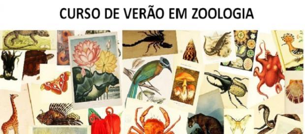 USP oferece 40 vagas em curso de Zoologia