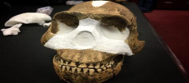Cranio appartenente all'Homo naledi