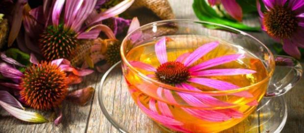 Equinácea para combatir la gripe y los resfriados