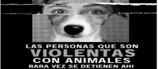 Personas violentas con animales no se detienen ahí