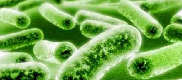 O bacterie poate fi cheia vieții veșnice