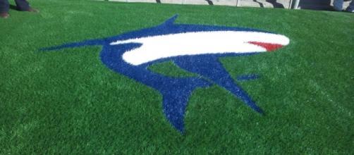 Lo squali rossoblu posto all'entrata del terreno.