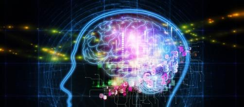 Cérebros humanos não possuem gênero