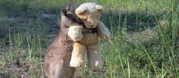 Doodlebug, o canguru com seu amigo inseparável
