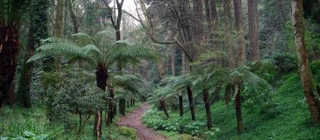 Bussaco reúne centenas de espécies de flora únicas