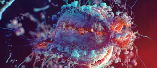 Imagen de un virus visto desde un microscopio.