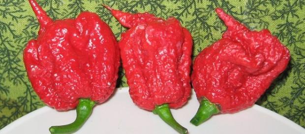 Carolina Reaper, el chile más picante del mundo.