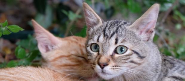 Gatos seriam mortos e sua carne vendida