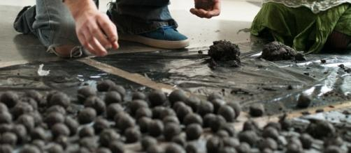 bombas de semilla - medioambiente