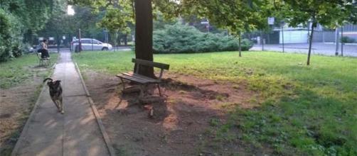 Monza, coppia fa sesso su panchina area cani