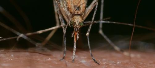 El mosquito deja de ser el unico transmisor