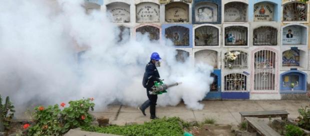 Eliminação dos mosquitos que transmitem a doença