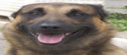Anche i cani poliziotto vanno in pensione