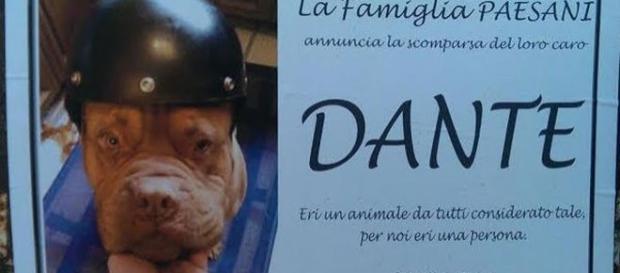 Dante viene salutato dai suoi umani