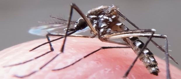 Zika vírus tem preocupado as autoridades nacionais
