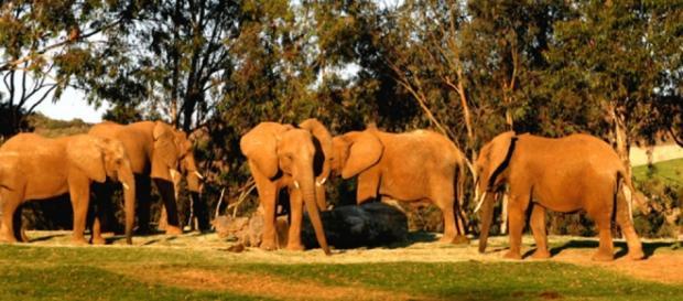 Manada de elefantes en plena sabana