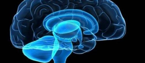 ippocampo custode del GPS del cervello