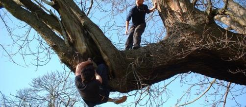 Tree climbing, la nueva forma de hacer ejercicio