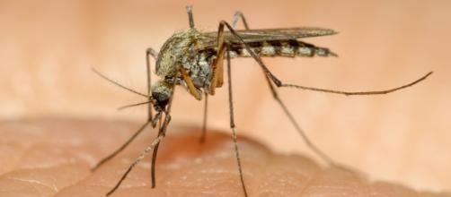 Así se transmite el virus zika