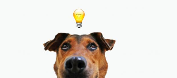 Agora será possível saber o que um cão pensa.