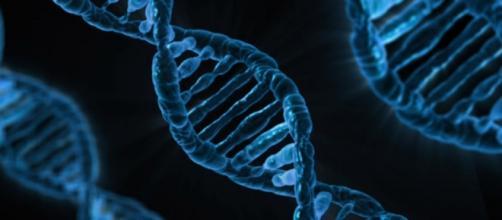 """Il DNA """"fotografato"""" da un microscopio"""