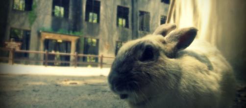 Okunoshima, también conocida como isla conejo
