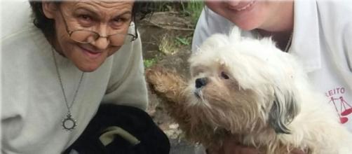 GCN - Dona Santa resgatou Thor e mais 50 cachorros