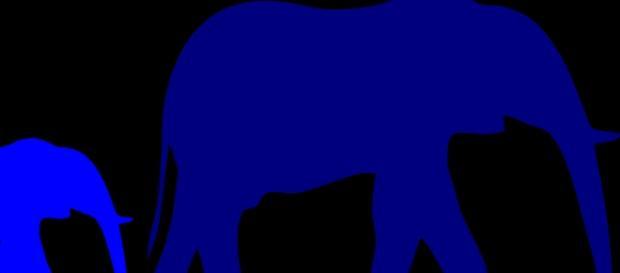 Elephants & Ivory. Courtesy of Pixabay commons
