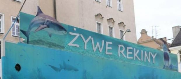 Mobilne akwarium z rekinami w Opolu