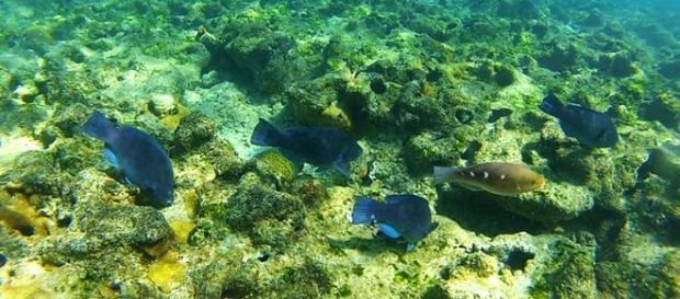 Biodiversidade em Abrolhos na Bahia