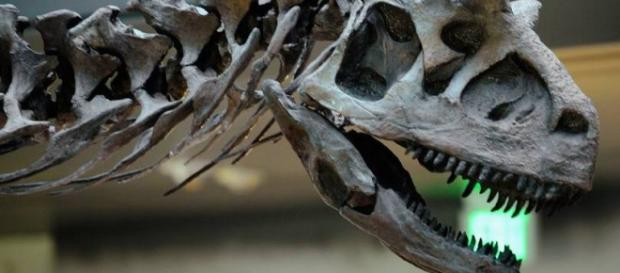 Existência de 2 tipos de dinossauros em Marrocos