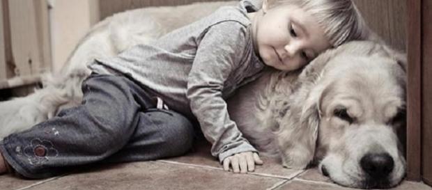 5 formas de demonstração de amor do seu cachorrinho