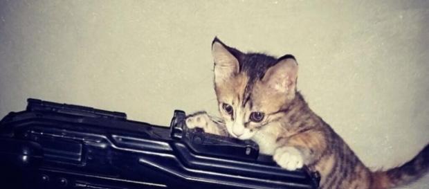 l'Isis lancia fatwa contro i gatti