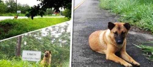 El triste final para la perra que esperó un año a su familia al ... - com.ar