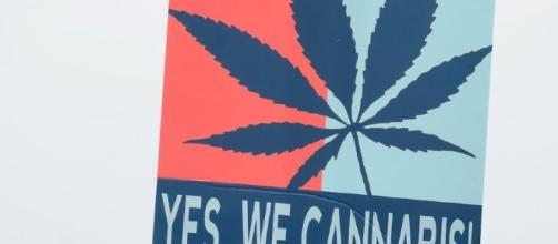 la marjuana è una sostanza sempre più diffusa tra i ragazzi delle scuole berlinesi