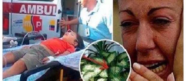 Mi hijo murió envenenado por esta maldita planta. ¡Es urgente que ... - dominicanosoy.net