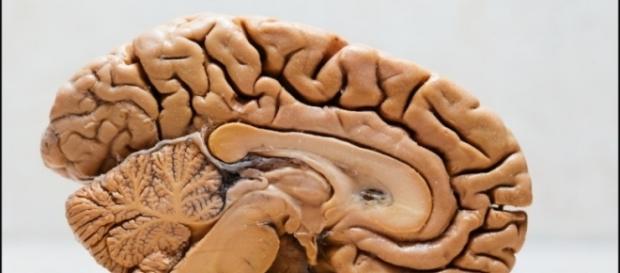 Doar corpos para pesquisa ajuda nos avanços científicos