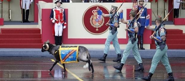 """El carnero """"Miura"""" desfilando con la Legión"""
