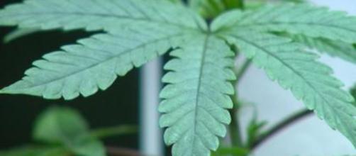 Marijuana legalization, medical marijuana, and marijuana facts ... - cbsnews.com