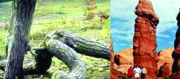 Fotografia de cenas da natureza inusitadas