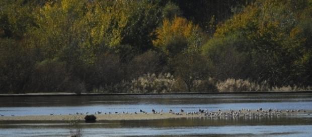 El río Tajo atraviesa una situación dramática
